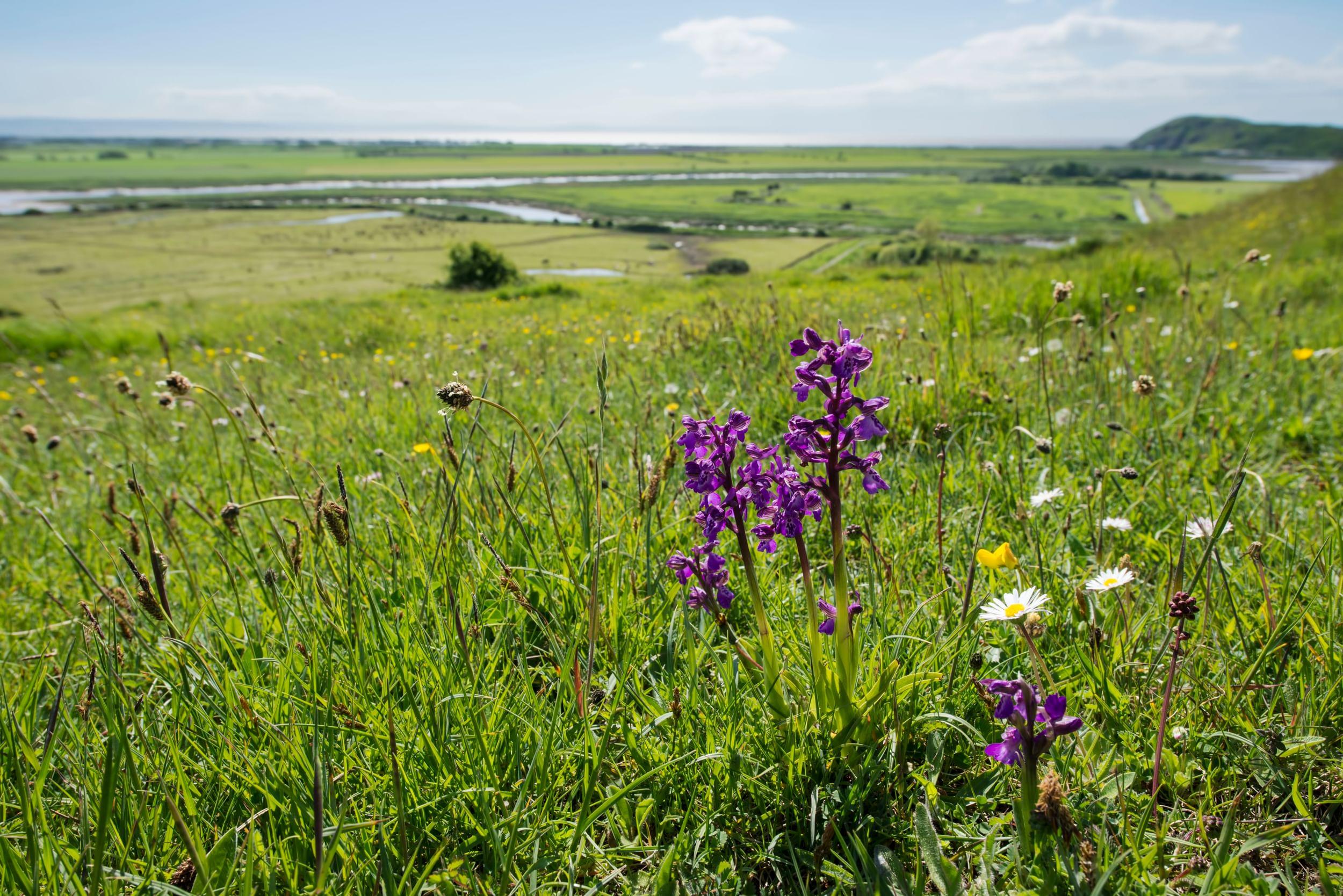 Purple flowers in a meadow