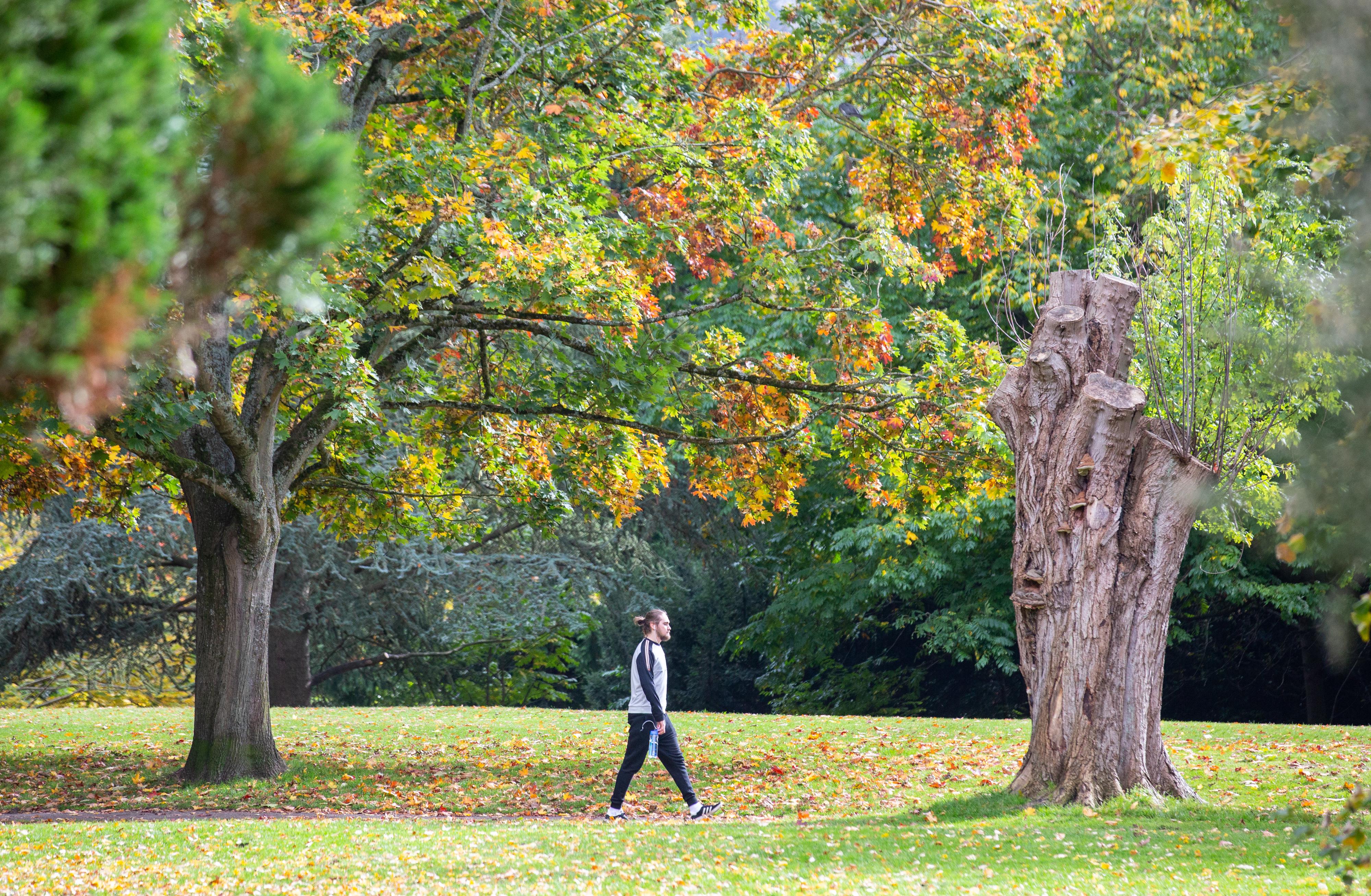 Man walking through a park